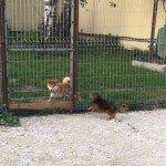 Как питомец себя чувствует в гостинице для животных